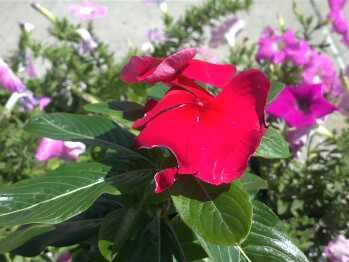Camera samples made with the LG Thrill 4G - LG Thrill 4G Review